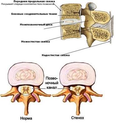 Анатомия позвоночника